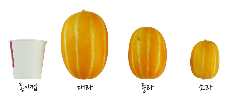 성주참외 크기별 구분 비교